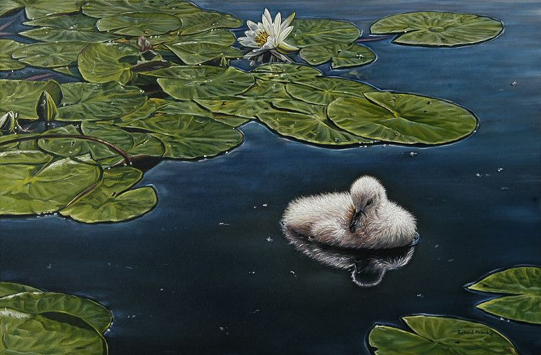 "Image of art work ""Cygnet and Water Lilies"""
